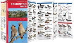 Edmonton Birds (Pocket Naturalist® Guide)