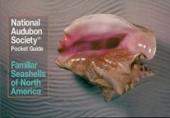 Familiar Seashells of North America (National Audubon Society® Pocket Guide)