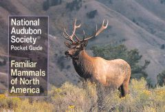 Familiar Mammals of North America (National Audubon Society® Pocket Guide)