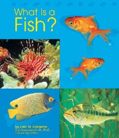 What is a Fish? (Animal Kingdom Series)