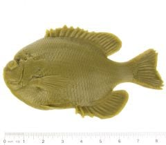 Bluegill Fish Printing Replica (Adult)