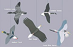 Water Birds and Bald Eagle Mobile