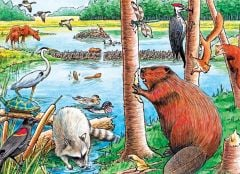 Beaver Pond (35-Piece Tray Puzzle)