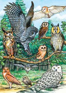 North American Owls (35-Piece Tray Puzzle)