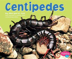 Centipedes (Insects & Other Arthropods Series)