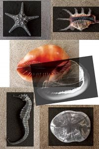Seashore Animals X-Rays And Picture Cards