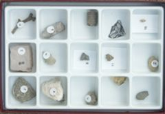 Fossils Over Time: Paleozoic (Specimen Collection)