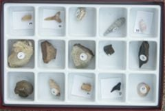 Fossils Over Time: Cenozoic (Specimen Collection)