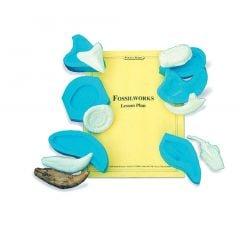Fossil Replica Casting Kit