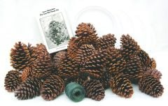 Pine Cone Bird Feeder Discovery Kit®