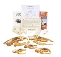 Food Chain Discovery Kit®