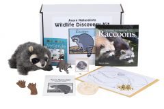 Wildlife Discovery® Kit: Raccoon