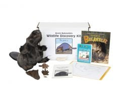 Wildlife Discovery® Kit: Beaver