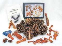 Squirrel Clues (Animal Signatures® Kit).