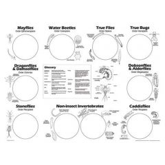 Freshwater Invertebrate Sorting Sheets (from the Stream Ecology Kit