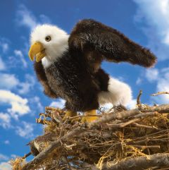 Bald Eagle (Small) Puppet