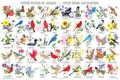 State Birds & Flowers (Laminated Poster)