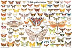 Moths of the World (Laminated Poster)