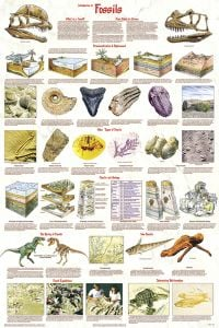 Fossils Poster (Laminated)