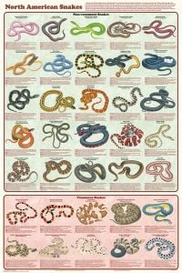 North American Snakes (Laminated Poster)