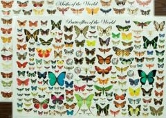 Butterflies & Moths Laminated Poster Set (Discounted Set of 2 Posters)