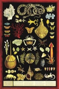 Curiosity Cabinet (Laminated Poster)