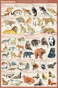 Carnivora (Laminated Poster)