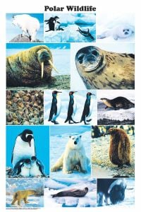 Polar Wildlife (Laminated Poster)