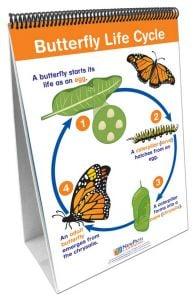 Life Cycles Flip Chart®