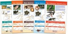 Owl Pellet Prey Identification Chart Set (5 Charts)