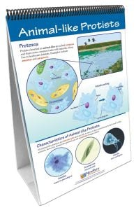 Protists: Pond Microlife Flip Chart®