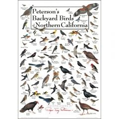 Peterson's Backyard Birds of Northern California Poster