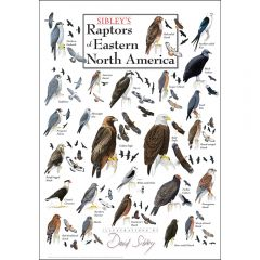 Sibley's Raptors of Eastern North America Poster