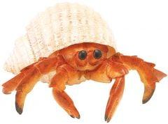 Crab (Hermit) Model