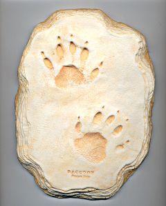 Raccoon Track Cast (Large Plaque)