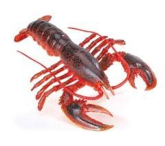 Lobster Model