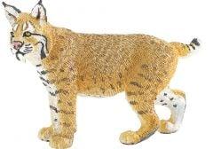 Bobcat Model