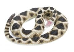 Rattlesnake (Eastern Diamondback) Model