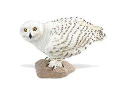 Owl (Snowy) Model