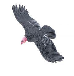 Condor (California) Model