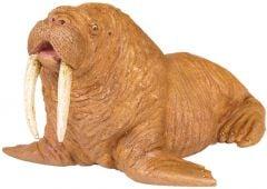 Walrus Model