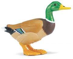 Duck (Mallard) Model
