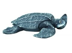 Sea Turtle (Leatherback) Model
