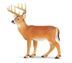 Deer (Whitetail Buck) Model