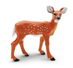 Deer (Whitetail) Fawn Model