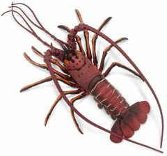 Lobster (Spiny) Model