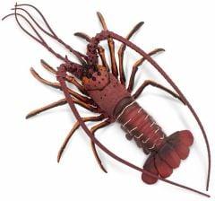 Lobster (Spiny) Model