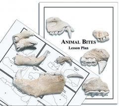 Animal Tooth Casts Activity Kit