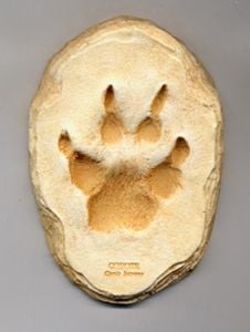 Coyote Track Cast (Small Plaque)