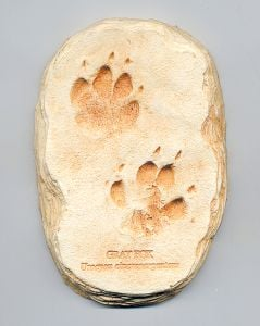 Fox (Gray) Track Cast (Small Plaque)